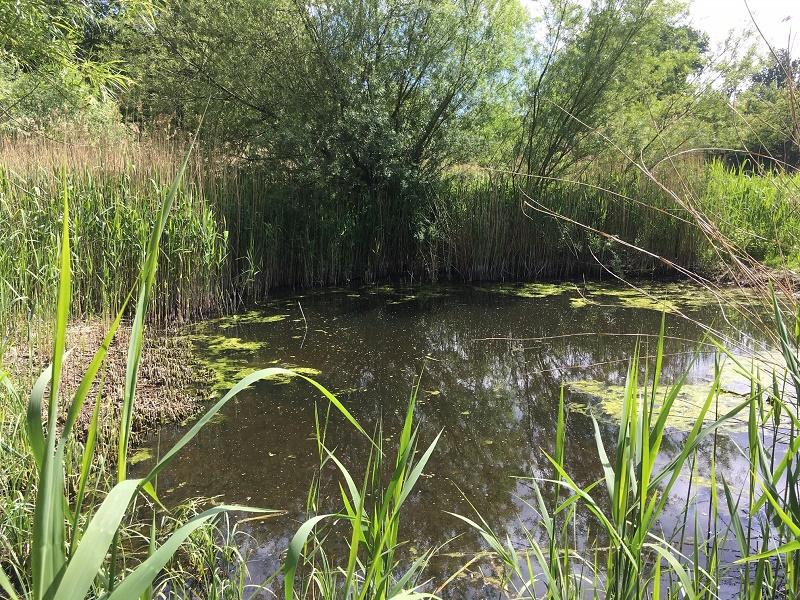 Nieuwsbrief 7 november – Start WaterLab Flevoland en Bijeenkomst Waterzuivering