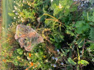 planten bloeien op vruchtbare klei