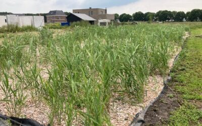 Uitslag nulmeting waterschap in tweede helft augustus
